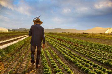 Çiftçi öksüz kaldı