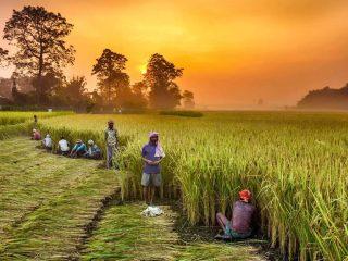Çiftçiler yakında çarıkla gezecek